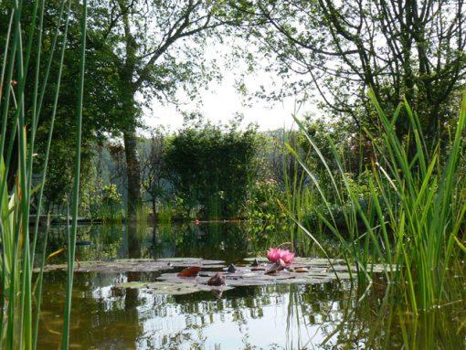 Natuurlijke vijver Hattem (Gelderland)