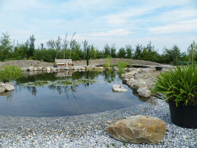 Natuurlijke vijver Marknesse (Flevoland)