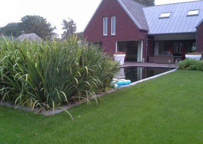 zwemvijver Odoorn Vossebeld Vijvers (2)