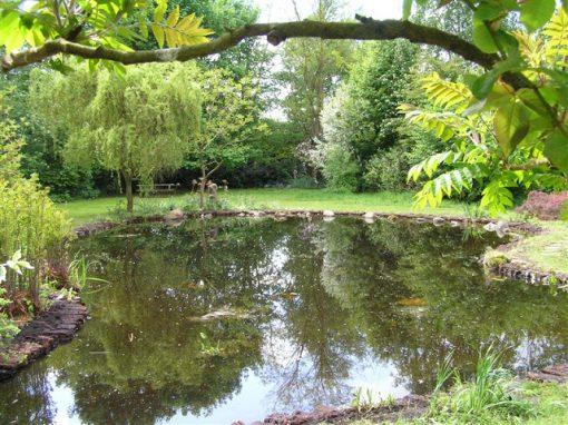 De natuurlijke vijver de meest voorkomende vijver in de tuin for Tuin en vijver