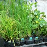 Plantenpakket voorbeeld