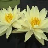 Yellow-Sensation